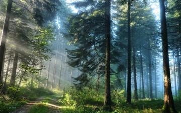 Лес — друг человека