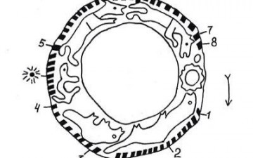 Важ календар – звериный календарь мифологии коми
